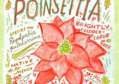 Christmas Greens - Poinsettia