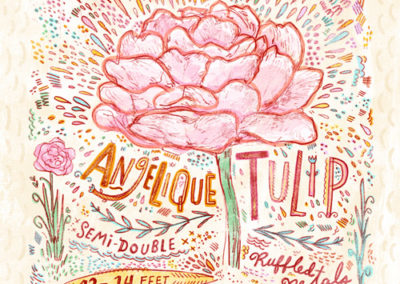 Flower - Angelique Tulip
